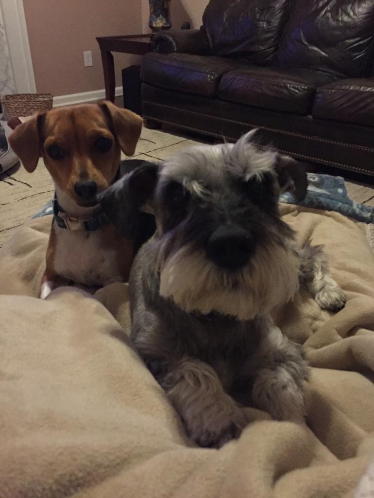Cal & Trixie